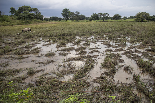 Daule, Ecuador: A region caught between drought and floods
